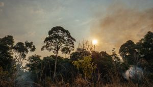 Carbon emissions from Amazonian forest fires up to 4 times worse than feared