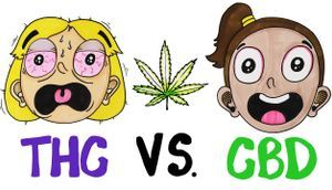 THC vs CBD Whats In Your Weed