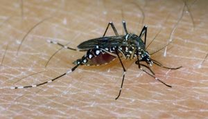 Human Diet Drugs Kill Mosquitoes' Appetite Too